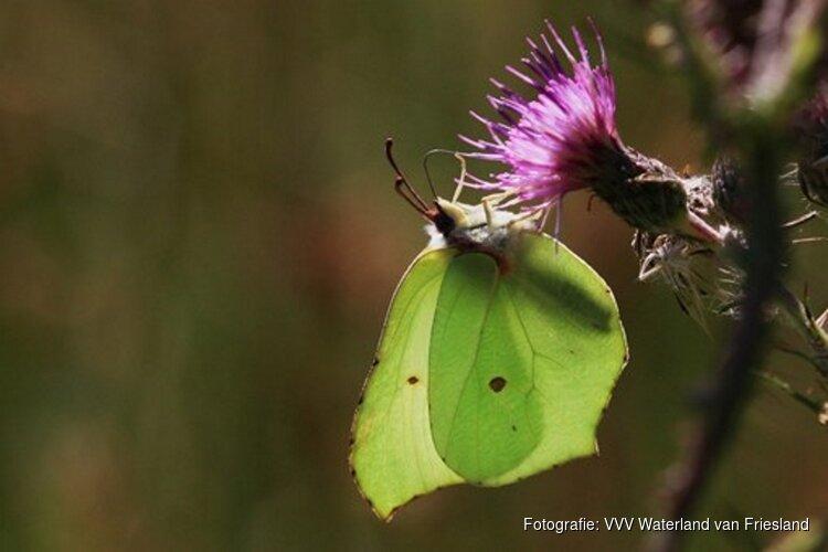 Rondleiding door de Vlindertuin (Strúntún) van Lemmer